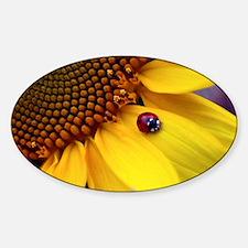 Ladybug on Sunflower1 Sticker (Oval)