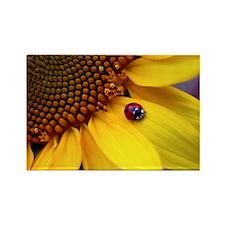 Ladybug on Sunflower1 Rectangle Magnet