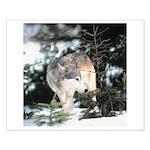 Wilderness Wolf 16