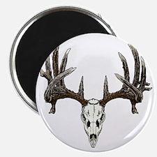 whitetail buck skull d Magnet