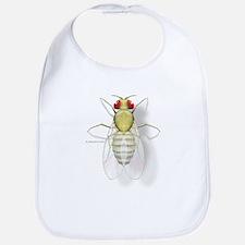 Drosophila Bib