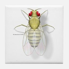 Drosophila Tile Coaster