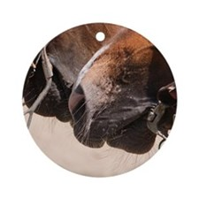 2 Horse Noses Round Ornament