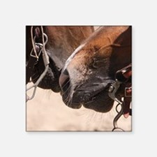 "2 Horse Noses Square Sticker 3"" x 3"""