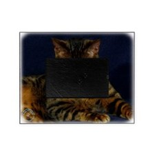 Bengal Cat 9W080D-128 Picture Frame