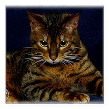 "Bengal Cat 9W080D-128 Square Car Magnet 3"" x 3"""
