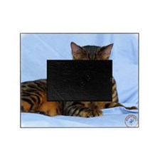 Bengal Cat 9W052D-023 Picture Frame