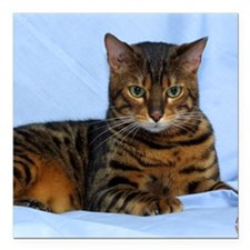 "Bengal Cat 9W052D-023 Square Car Magnet 3"" x 3"""