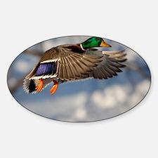 D1271-005cal Sticker (Oval)