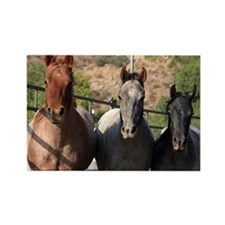 3 Roan Horses Rectangle Magnet