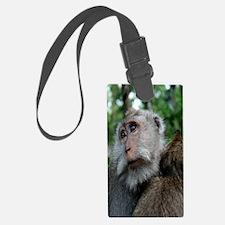 MonekyForrestiPhone Luggage Tag