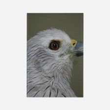 EagleiPhone Rectangle Magnet