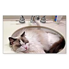 Bentley in sink3 Decal