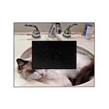 Bentley in sink3 Picture Frame