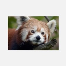 Red Chinese Panda Rectangle Magnet