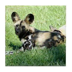 African Wild Dog Tile Coaster