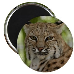 Bobcat 2 Magnet