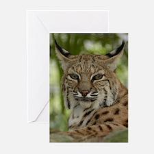 Bobcat 2 Greeting Cards (Pk of 10)
