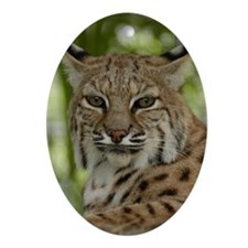 Bobcat 2 Oval Ornament