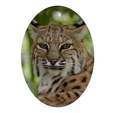 Bobcat 2 Oval Ornament