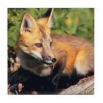 Red Fox Art Tile