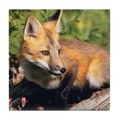 Red Fox Art Tile
