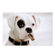 White Boxer With Black Eye Postcards (Package of 8