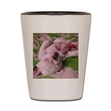 frenchie pink tile Shot Glass