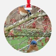 BB4.25x5.5SF Ornament