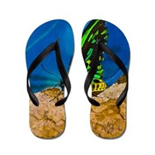 black and green butterfly BIG Flip Flops