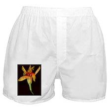 Scans2010_A_Lilly_ElDesperado_4_8x10 Boxer Shorts
