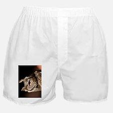 (11p) Burrowing Owl Profile Boxer Shorts