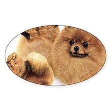 Pomeranian Multi Decal