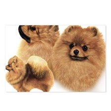 Pomeranian Multi Postcards (Package of 8)