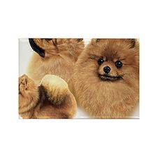 Pomeranian Multi Rectangle Magnet