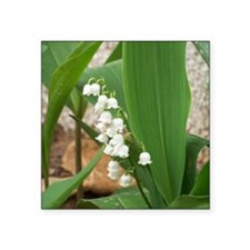 """Lily of the Valley Square Sticker 3"""" x 3"""""""