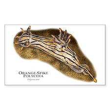 Orange-Spike Polycera Decal