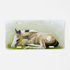 buckskin paint foal Aluminum License Plate