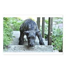 Nefertiti the Irish wolfhound puppy Postcards (Pac