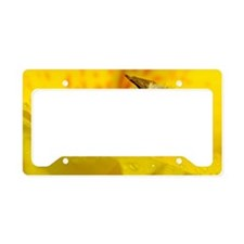 BeeCanna_smallFrame License Plate Holder