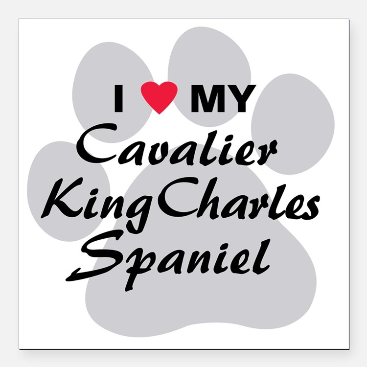 "cavalier-king-charles-sp Square Car Magnet 3"" x 3"""