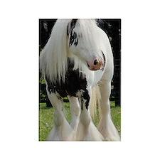 Gypsy Horse Stallion Rectangle Magnet