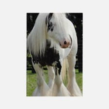 Gypsy Horse Stallion Rectangle Magnet