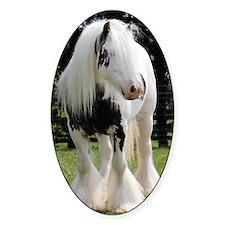 Gypsy Horse Stallion Decal