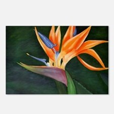 Bird of Paradise (Oil) Postcards (Package of 8)