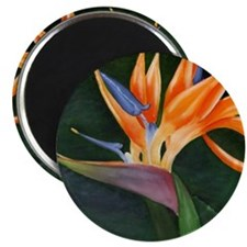 Bird of Paradise (Oil) with frame Magnet