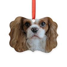 chesterbig Ornament