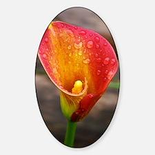 calla lily Decal