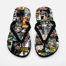 2012 Peoples Choice 23 x 35 Flip Flops
