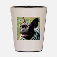 Jazzy Shot Glass